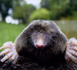 What Are Moles?